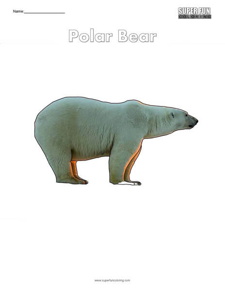 Polar Bear Coloring Page Free